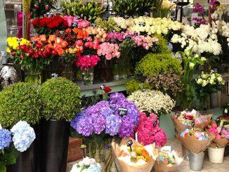 shop hoa tươi ở tphcm